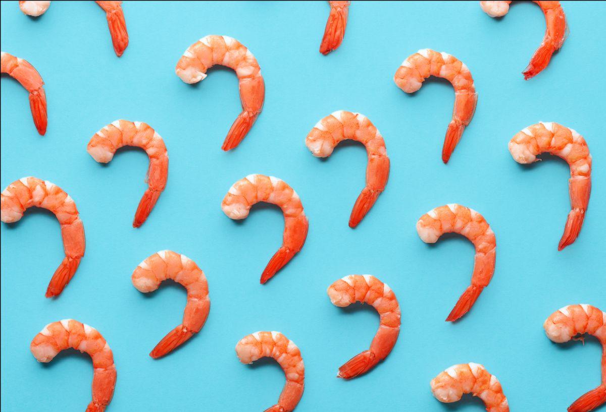Shrimp Photo